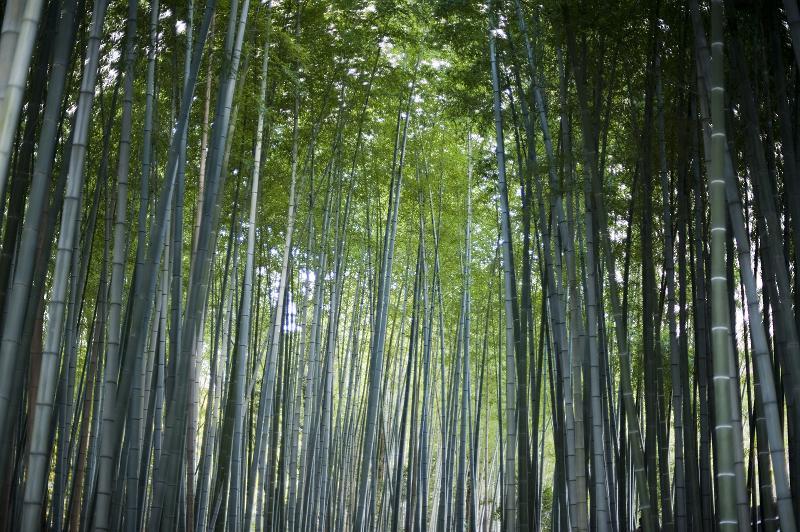 Újszerű természetesség: a bambuszparketták hódítása